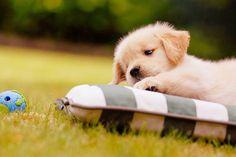cutest puppi, awww, lil doggi, puppies, furri friend, anim, pet, ador, cuti doggi