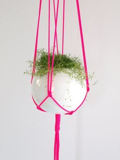 plant hanger!