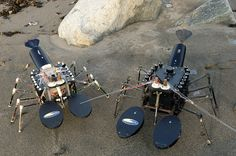 Inventor Joseph Ayers--who's also the author of several lobster cookbooks--has spent the past three decades developing biomimetic robots like these, which were made for the U.S. Navy