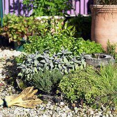 How to grow a herb garden!