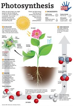 Photosynthesis infographic from Kids Discover