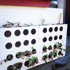DIY Vertical Wall Garden for Strawberries