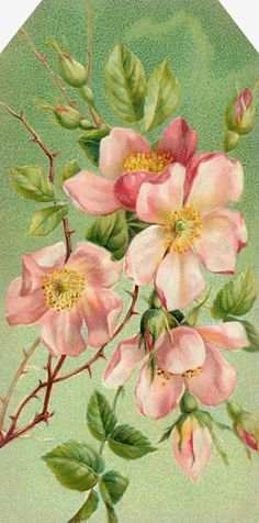 """""""Garden of the Heart"""" ~ old-fashioned pink roses."""