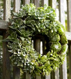 Love this green living wreath of succulents ......so beautiful!!
