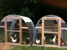 Cattle panel chicken tractors. Chicken Forum on facebook