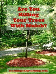 How a tree is mulched is an important factor. Improper mulching can stress a tree, rather than benefit it, and cause it to be at risk for in...