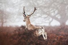 .through the mist.