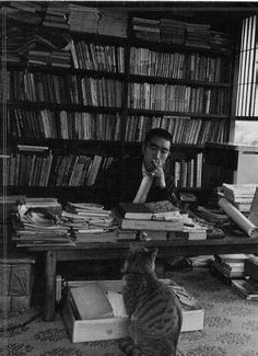 Yukio Mishima and kitten, almost famous cats