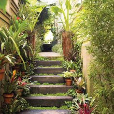 Great ideas for exotic outdoor decorations   Side yard   Sunset.com