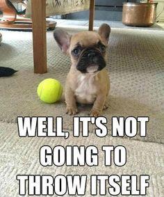 BALL!  BALL!  BALL!  THROW THE BALL!
