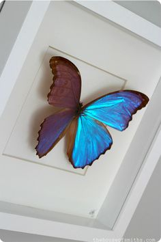 Real mounted and framed butterfly - The House of Smiths purchased from Trinkets and Butterflies http://www.etsy.com/shop/trinketjewelry