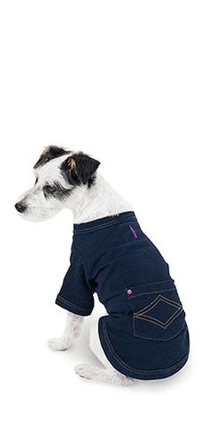 What?! Pajama Jeans for DOGS. My dog Needs these! Ha!