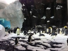 Antarctica: Empire of the Penguin is expected to see lower crowds in October!