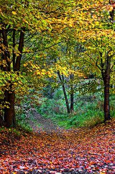 Lovely Autumn Trail