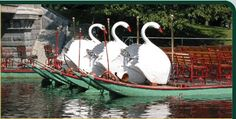 In the spring, head to the Boston Public Garden for a ride on the famed Swan Boats.