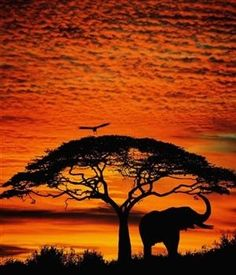 Another beautiful African sunset!