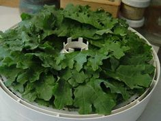 Debbi's Blahhhhg...zzz...: How to Dehydrate Kale (and other greens)