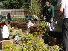Backyard gardening  #springmadesimple
