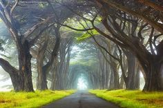 Point Reyes National Seashore, California, USA