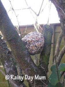 Explore Outdoors - Feeding the Birds ~ Rainy Day Mum