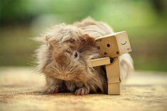 Bunny love - Amazon Little Box People