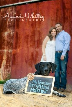 Engagement session pictures with their dog