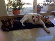 My 3 fur boys. Wolfie, Mac & Toto Hughes.