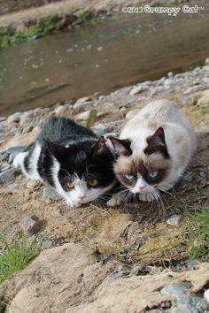 Pokey and Tard (Grumpy cat).