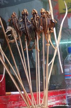 Street Food: Fried Lizard on a Stick in China