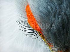 secretary bird - brilliant photo! By Linda Wright