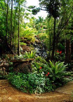 rainforest garden - 1 day!