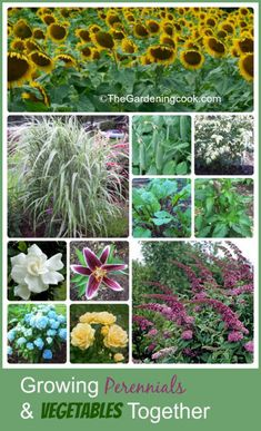 Growing vegetables, herbs, annuals and perennials together combines the best of both worlds!  Find out how the Garden Charmers do this:  http://thegardeningcook.com/garden-charmers-combine-perennials-vegetables/