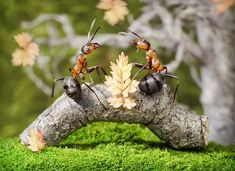 Ant Tales by Andrey Pavlov | Photo Creme - Your Inspiration!