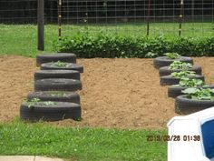 Use tires to keep the vines of your pumpkins, squash, watermelon, and cantelope plants off the ground. Cuts down on weeds too!