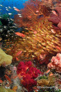 beautiful reef ♥