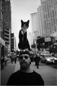 cats, anim, new york city, matt weber, kitti, walk, photographi, street photography, hat