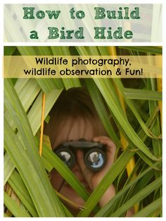 Build a Bird Hide