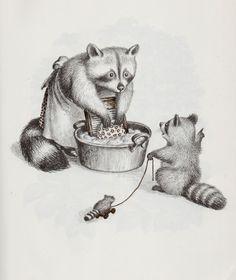 babi raccoon, raccoon illustration, garth william