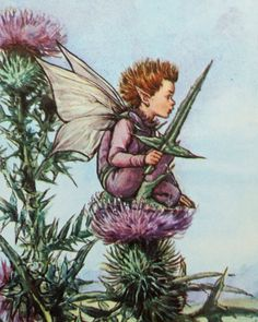 Thistle Fairy £4.50