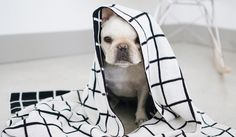 Modern Dog Clothing