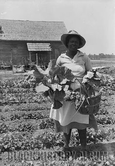 African-American Woman Picking Vegetables from a Garden, Unknown Location,1936.