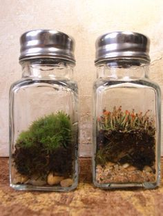 glass salt & pepper shaker terrariums
