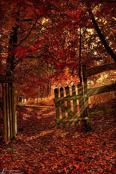 Forest Gate, Herbst, Germany