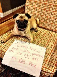 Ah, dog shame.