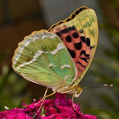 butterfly..gorgeous colors