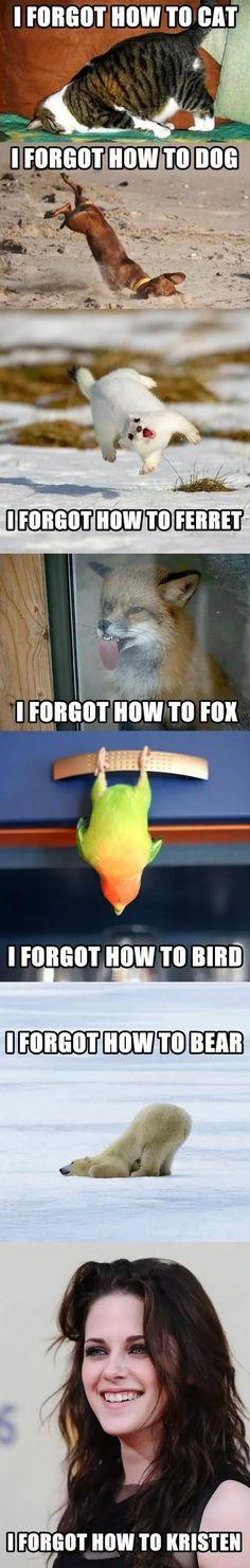 Animals that just forgot...