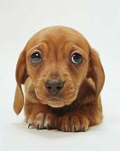 I give you sad eyes, you give me food??