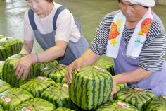 Japan: Square Watermelons