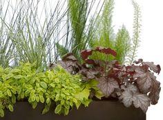 grasses, ferns, heuchera