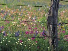 Barbed wire meadow